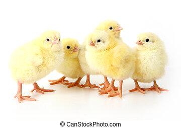 poulet, cinq