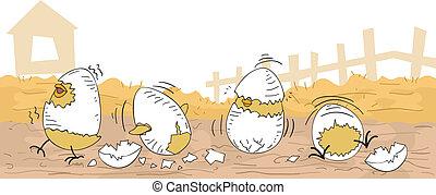poulet, hatchlings