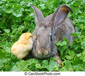 poulet, lapin