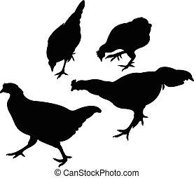 poulet, vecteur, silhouette, ensemble