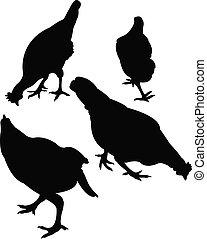 poulet, vecteur, silhouette