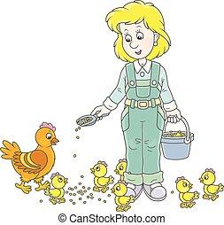 poulets, femme, volaille, alimentation