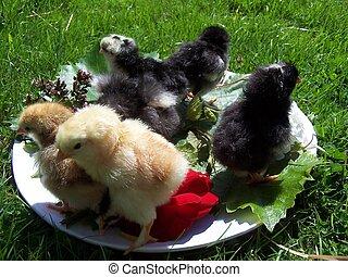 poulets
