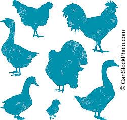 Poultry, farm birds silhouettes