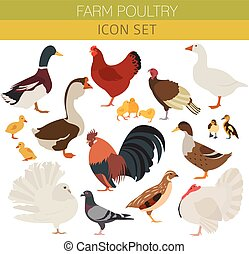 Poultry farming. Chicken, duck, goose, turkey, pigeon, quail...