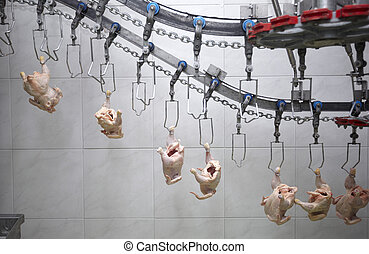 poultry processing meat food industry - close up of poultry...
