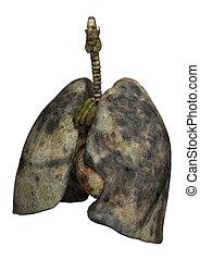poumons, femme, fumeurs