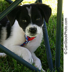 Pound Puppy - Endearing puppy rescued from dog pound seeks...