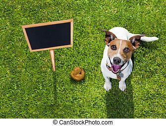poupe, herbe, parc, chien
