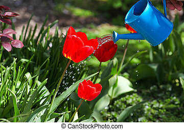 pouring from watering can on grass water