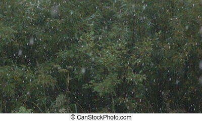 Pouring rain in the forest, rainy summer. Super slow motion 1000 fps