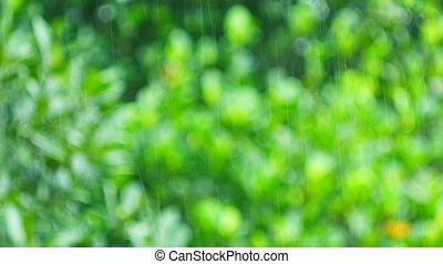 pouring rain in the tropical rainforest trees blurred background