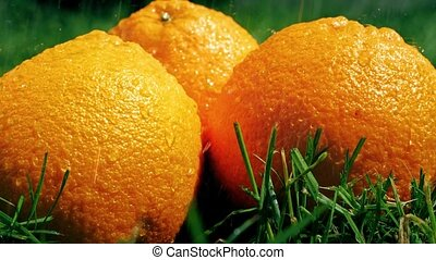 Pouring water on oranges and grass, slow motion shot -...