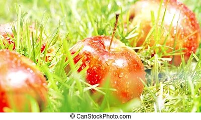 Pouring water on red apples on the grass, slow motion shot -...