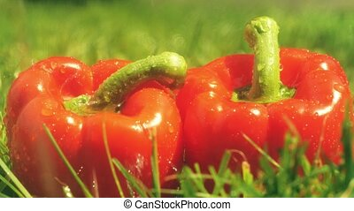 Pouring water on red sweet peppers - Sprinkling water on...