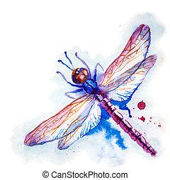 pourpre, aquarelle, libellule