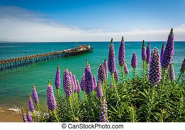 pourpre, california., capitola, fleurs, jetée, vue