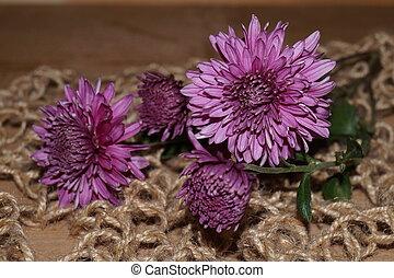 pourpre, chrysanthèmes