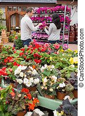 pourpre, couple, fleurs, choisir