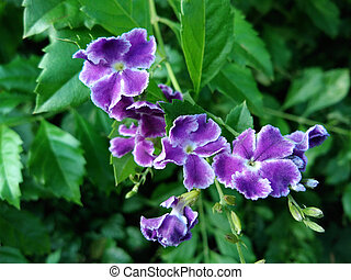 pourpre, fleurs sauvages, nature