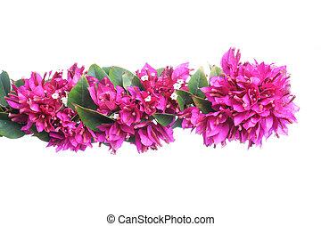 pourpre, floral, copie, frontière, espace