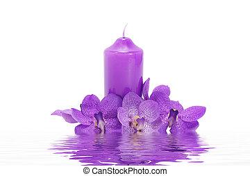 pourpre, flower., orchidée