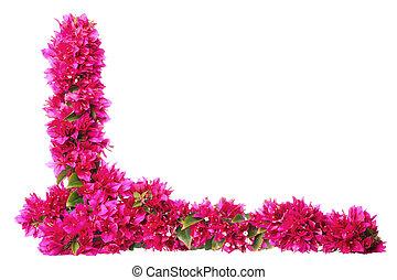 pourpre, frontière, floral