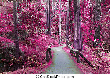 pourpre, imagination, forêt, route