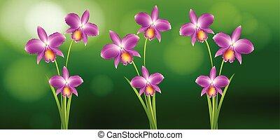 pourpre, jardin, orchidée