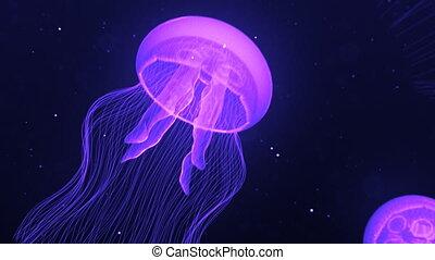 pourpre, méduse, boucle, natation