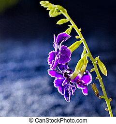 pourpre, macro, bokeh, fleur, artistique