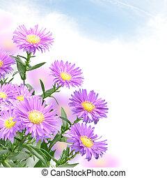 pourpre, maman, fleurs
