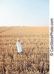 poursuite, agriculture, recherche, champ, scientifique, grain, donnéesd'essai