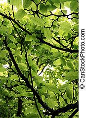 pousse feuilles, arbre vert