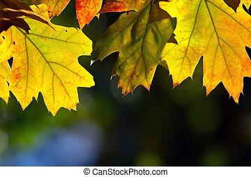 pousse feuilles, automne