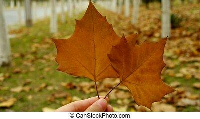 pousse feuilles, deux, main, secousse