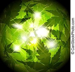 pousse feuilles, printemps, résumé, arrière-plan vert, frais