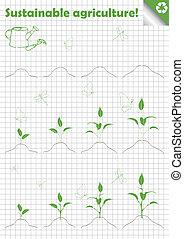 pousse, feuilles, vert, branche