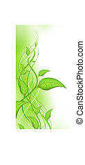 pousse, feuilles, vert