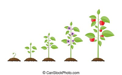 pousse, fruit., croissance, plante