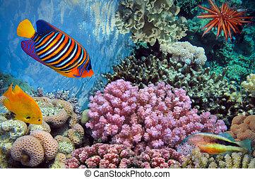 pousse, sous-marin, vif, récif corail, poissons