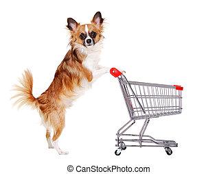 pousser, chihuahua, achats, chien, charrette
