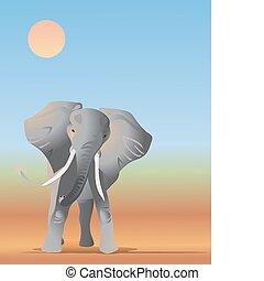 poussière, éléphant