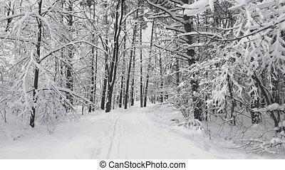 pov, дорожка, гулять пешком, лес