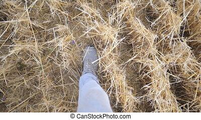 pov, feet., marche, field., aller, sec, homme, blé, vue, straw., étapes, mâle, mouvement, fin, type, haut, unrecognizable, marcher, point, jambes, lent, espadrilles