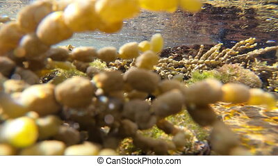 POV from within tidal rock pool - POV tidal pool while waves...