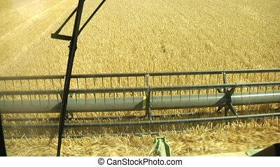 POV of combine harvesting wheat