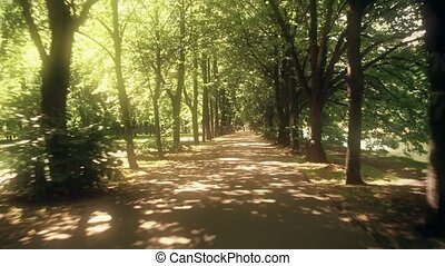 POV time lapse of a sunlit park alley on a summer day - POV...