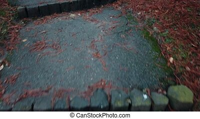 POV walk in the garden on a garden path covered with moisture with a lot of fallen red leaves