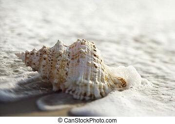 powłoka konchy, waves.
